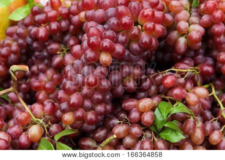 Close up of red wine grapes on a heap