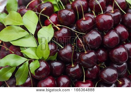 Close up of fresh cherries on a heap
