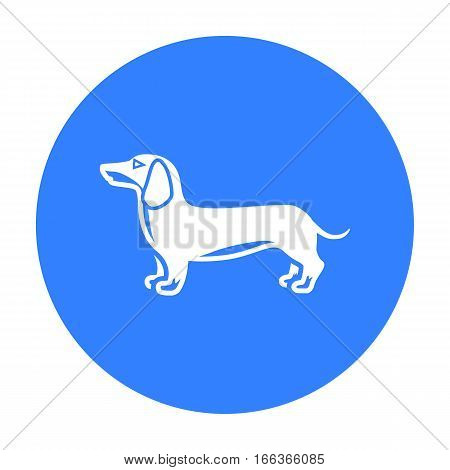 Dachshund vector illustration icon in blue design