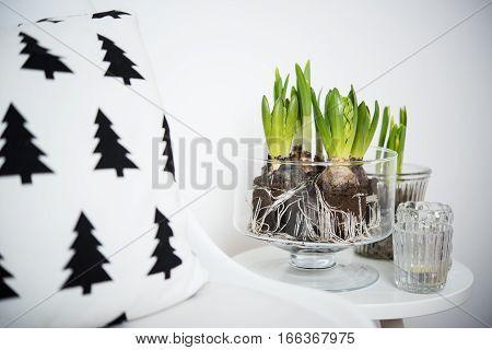 White scandinavian spring interior closeup, minimalist furniture and hyacinths in a jar