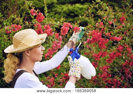 Young woman spraying tree in garden, the gardener takes care of the quince tree in orchard, holding spray bottle, happy young lady applying an insecticide or a fertilizer to her fruit trees, using a sprayer