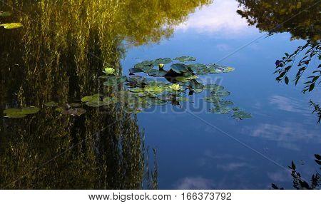 Waterlilies in Monet's Garden, water mirroring the sky
