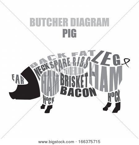 Butcher diagram of pork. Cuts of pig vector illustration