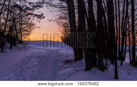 Beaten path in the snow and silhouettes of trees at sunset. Moravian landscape Kretinka.