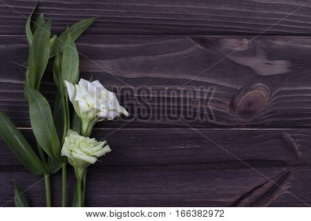 White flower on a dark wooden background. Valentine Day. Greeting card