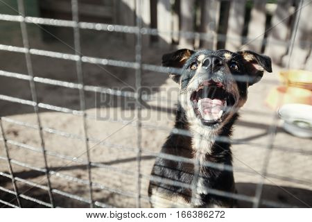 Homeless dog behind bars in a cage begging for the hosts. Looks begging eyes what would her helped animal advocates