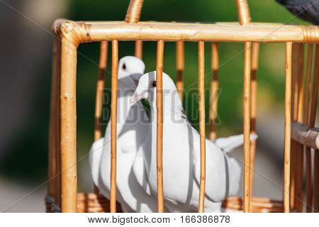 Two white wedding doves in a wooden cage. Wedding ceremony