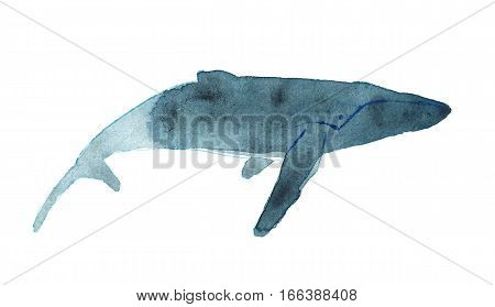 Watercolor Sketch Of Humpback Whale. Illustration Isolated On White Background