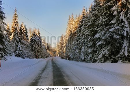 Winter snowy road avenue of spruce trees along the road frosted with snow. Blue sky.