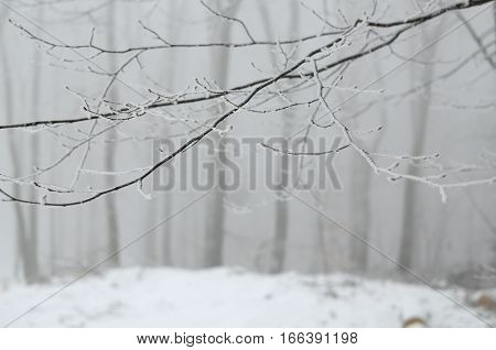 Frosted branches and twigs covered with frost and snow on a winter foggy day