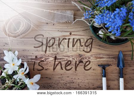 English Text Spring Is Here. Sunny Spring Flowers Like Grape Hyacinth And Crocus. Gardening Tools Like Rake And Shovel. Hemp Fabric Ribbon. Aged Wooden Background