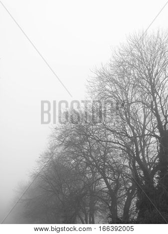 Monochrome rural trees taken early winter foggy morning