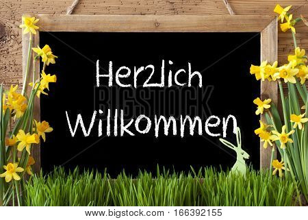 Blackboard With German Text Herzlich Willkommen Means Welcome. Spring Flowers Nacissus Or Daffodil With Grass And Easter Bunny. Rustic Aged Wooden Background.
