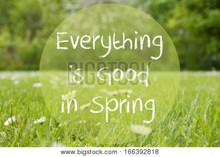 English Quote Everything Is Good In Spring. Spring Or Summer Gras Meadow With Daisy Flowers. Blurry Trees As Background.