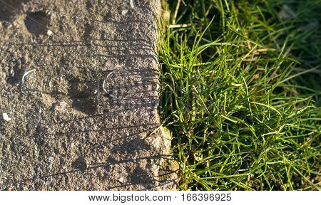 A grass grows near the stone on the road