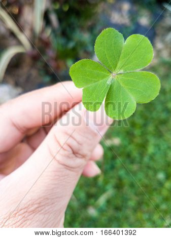 Hand of people giving leaf clover on blur background
