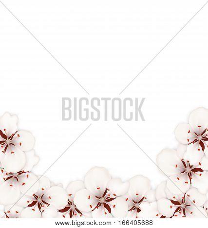 Illustration Abstract Border Made in Sakura Flowers Blossom. Layout, Card, Template, Sakura, Japan, Invitation - Vector