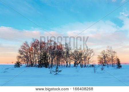 Winter Landscape In The High Vens, Belgium
