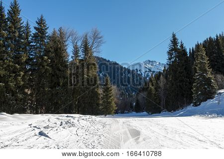 Ski Trail Through A Forest