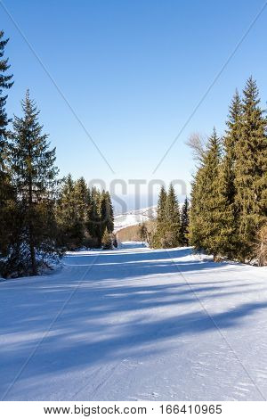 The Road To The Ski Through The Woods In Kazakhstan