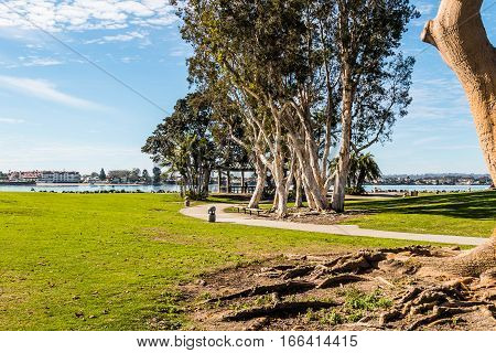 Path through Embarcadero Marina Park North, with San Diego bay in the background.