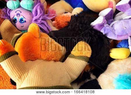 Dog Hiden On Toys
