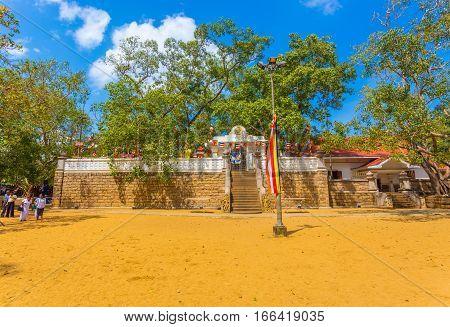 Anuradhapura Jaya Sri Maha Bodhi Tree Field H