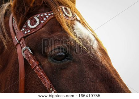A chesnut quarterhorse with his western bridle.