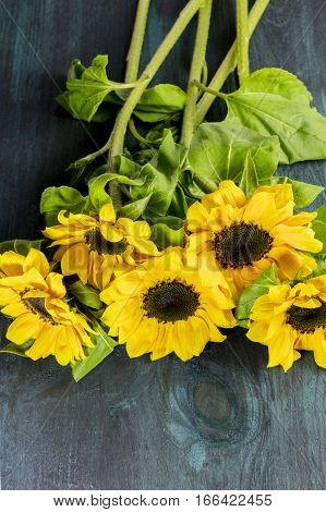 A photo of shiny yellow sunflowers with green leaves, shot from above on a dark wooden boards texture with copyspace