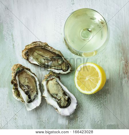 A square photo of freshly opened oysters with a slice of lemon and a glass of white wine, on a wooden background texture with copyspace