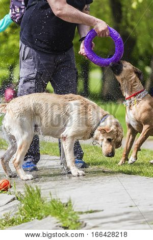 dog shaking off water. when they crawled from the water. A man with a circle for the game