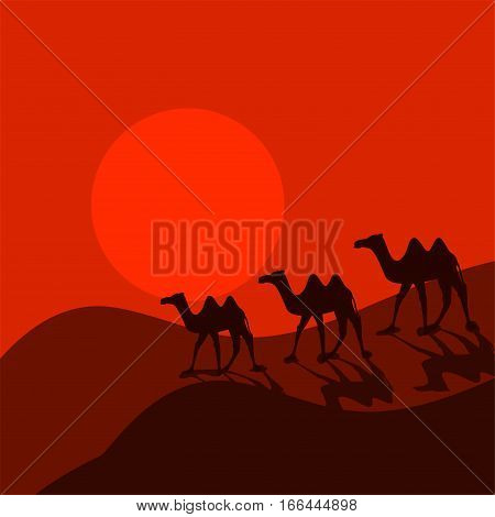 Camel caravan in desert cartoon vector. Two-humped desert animal group of three on red sunset landscape.