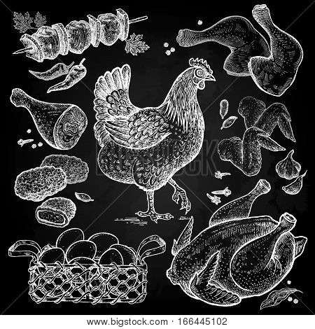 Bird and food objects. Sketch of poultry. Chicken carcass wings legs chicken nuggets chicken eggs in basket spices white chalk on a blackboard. Style Vintage engraving. Hand drawing vector.