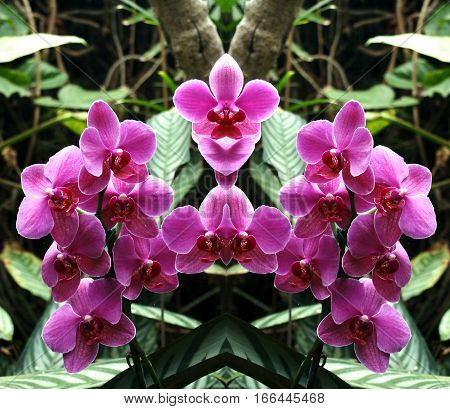 symmetrical photographs of orchid flower (Orchidaceae scientific name) are a family of monocots distinguished by the complexity of their flowers and their ecological interactions with pollinators and fungi with mycorrhizal.