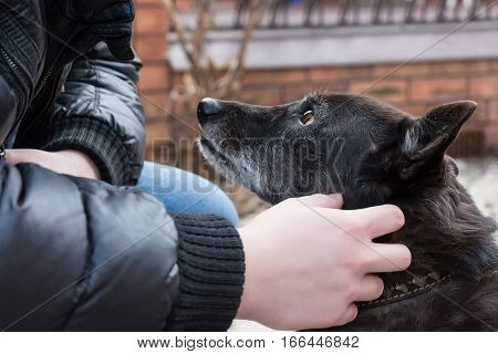 Black dog looks at its master who pets it