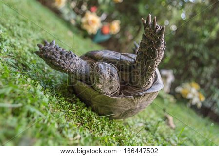 Turtle strugling to turn on her feet