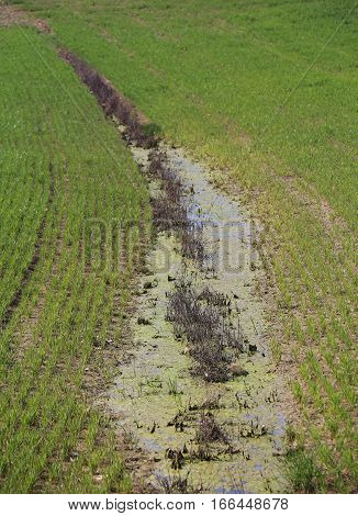 Ditch Full Of Water Because The Cultivated Field Does Not Absorb