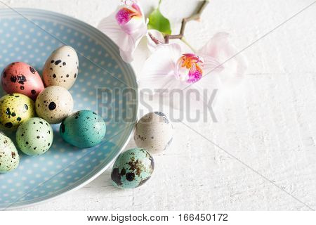 Easter eggs on plate and orchid abstract concept on white background