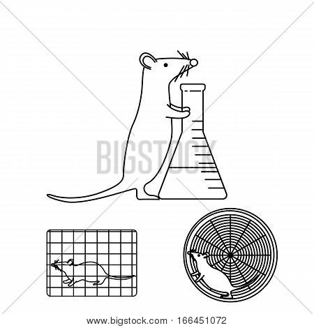 Mouse In Lab Experiments