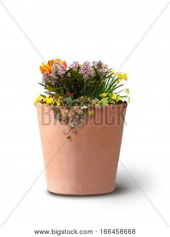 fresh flowers in clay pot isolated on white background