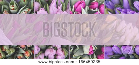 Mix of different tulips. Spring festive background