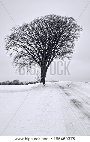 Black and white shot of a tree in the snow on a gray day
