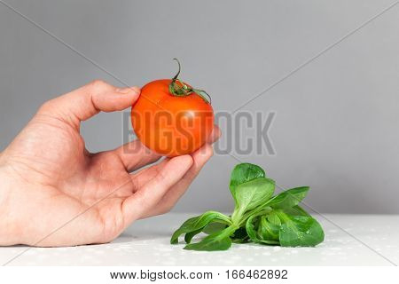 Cook served fresh tomato and lettuce, chef's hand offering healthy vegetables white background
