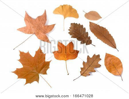 Various dried leaves group isolated on white