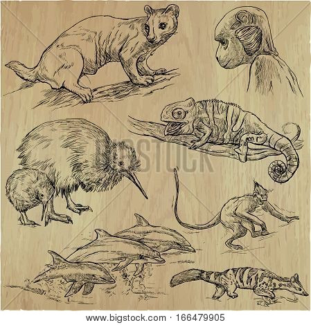 An hand drawn vector pack - Animals around the World. Collection of line art illustrations.
