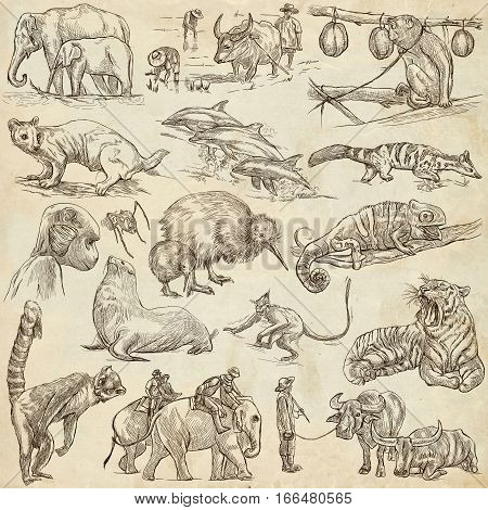 Animals around the World. An hand drawn full sized illustrations. Collection of line art pictures. Drawing on old paper.