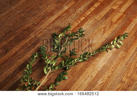 Green eucalyptus branch isolated on rich textured wooden rustic table, side view