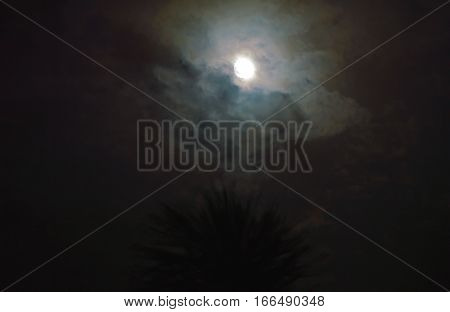 lunar on cloudy night and palm tree foreground