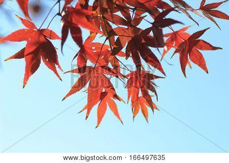 a fall season at Kyoto temple of nature