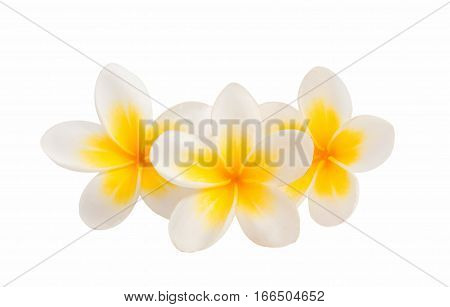 thailand decoration frangipani flower isolated white background